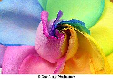 Close up of rainbow rose heart