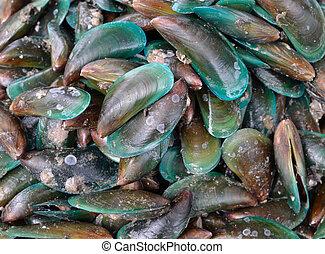 raw sea food - close up of raw sea food.