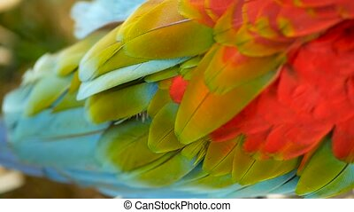 Close up of Red Amazon Scarlet Macaw parrot or Ara macao, in tropical jungle forest. Wildlife Colorful portrait of bird