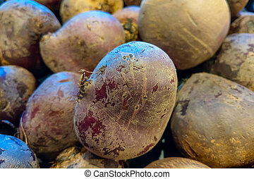 Close up of red beets in the store. Background.