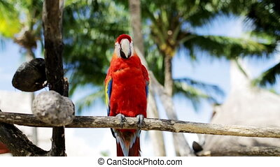 close up of red parrot sitting on perch