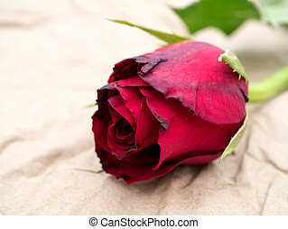 close up of red rose flower on brown paper.