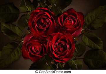 Close up of red rose in darkness.