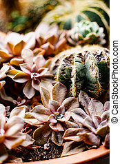 Close-up of red succulents and cacti in a pot.