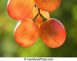 red transparent grapes - Close-up of red transparent grapes ...