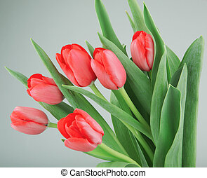 Close-Up Of Red Tulips Flowers Against White Background