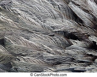 Close up of Rhea feathers