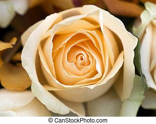 close up of rose.