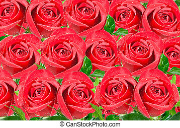 roses flowers background