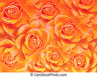Close up of roses flowers background
