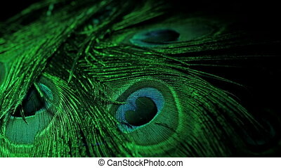 rotating peacock feathers. Green neon light