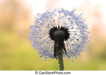 dandelion seed - Close-up of round dandelion seed as a...