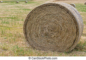 Close up of round straw bale on a field