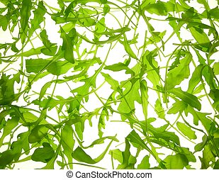 rucola salad - close-up of rucola salad leaves against white...