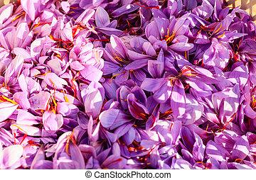 Close up of saffron flowers background