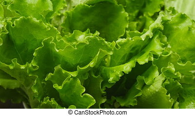Close-up of salads leaf