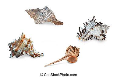 Close up of seashell on white background