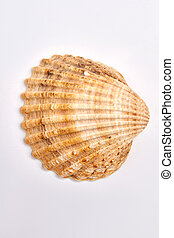 Close up of seashell.