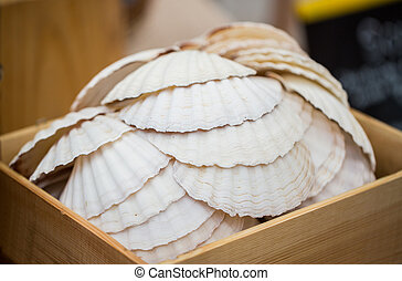 close up of seashells in wooden box