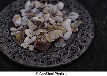 Close up of seashells on metal plate - Close up of seashells...
