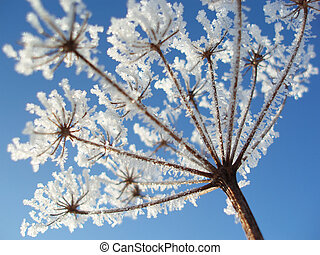 seed with ice crystals - Close-up of seed with ice crystals ...