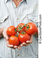 Close Up Of Senior Man Holding Home Grown Tomatoes