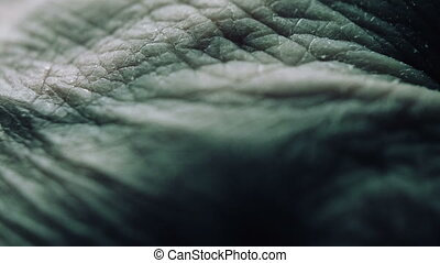 Close Up Of Senior's Hands With Alzheimer Disease