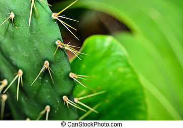 Close up of shaped cactus with long thorns