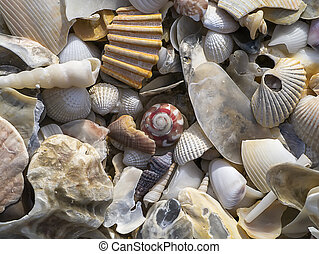 Close up of Shells on the beach.
