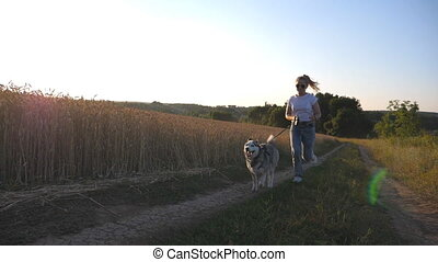 Close up of siberian husky dog pulling the leash during jogging along road near wheat field at sunset. Happy woman in sunglasses running with her pet along road near golden meadow. Slow motion
