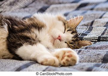 sleeping tabby cat on blue bedding