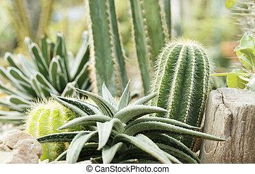 close up of small cactus garden