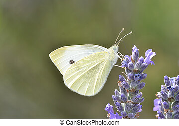 Close up of small white butterfly