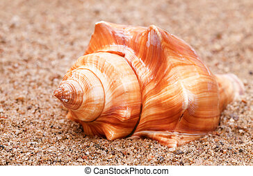 Close up of snail
