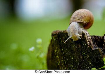 Close up of snail on a stump