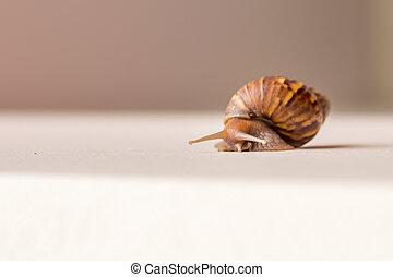 Close-up of snail walking