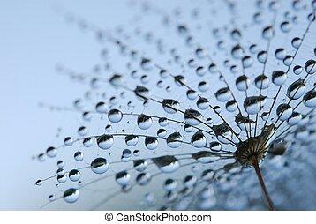 dandelion seeds - close-up of soft dandelion seeds to be...