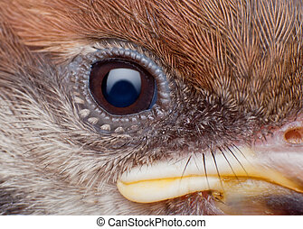 close up of sparrow face