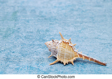 close up of spiny seashell