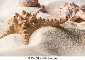 Close-up of starfish and seashell on light sand
