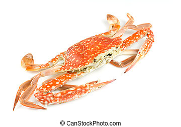 Close up of steam crab on white background.