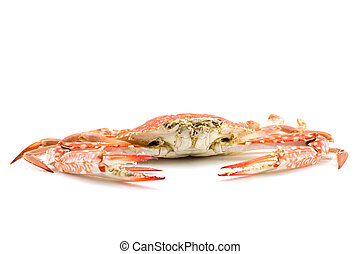 Close up of steam crab on white background, with copy space.