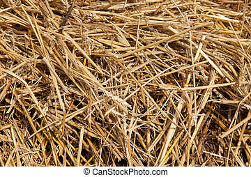 Close up of straw background texture