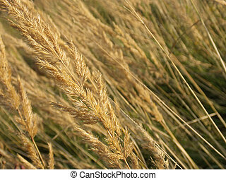 close up of straw