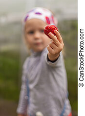 Close-up of strawberries in the hands of a little girl
