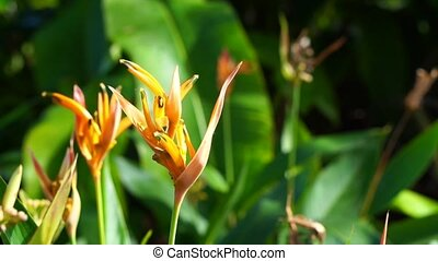Close up of strelitzia or bird of