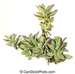 Close up of succulent in pot