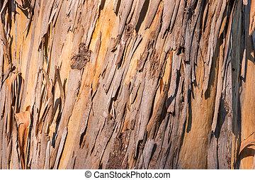sunlit peeling eucalyptus tree bark with copy space