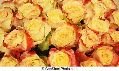 Close up of tan roses
