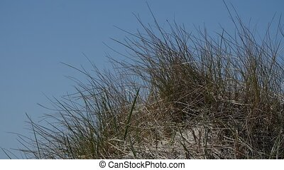 Close up of the beach grass